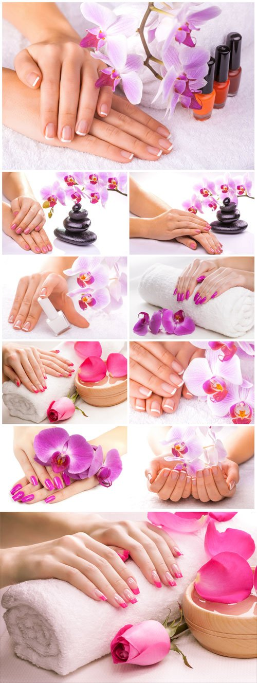 Female manicure, female hands and orchid flowers stock photo