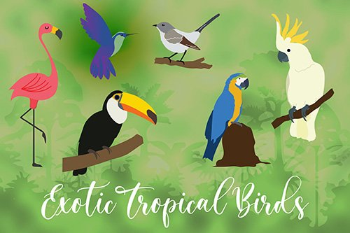 Exotic Tropical Bird Hand Drawn